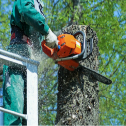 french-lick-tree-services-toppingg